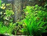 Mühlan Topartikel- 30 Wasserpflanzen, 3 Sorten, Trockenfutter