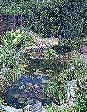 Mühlan Topartikel- Über 20 Wasserpflanzen für den Gartenteich, Teich