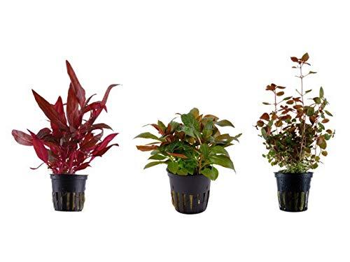 Tropica Pflanzen Set mit 3 schönen...