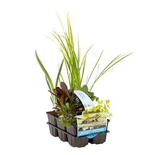 6er Pflanzkorb Set | Teichpflanzen...