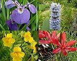 ZAC Wagner 10 Töpfe Seltener Sumpfblüher - Farbmix 1 Sortiment Teich Pflanzen Teichpflanze