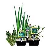 S VD VELDE WATERPLANTEN Teichpflanzen Paket Mini-Teich - 15er Set Wasserpflanzen, Winterhart - für 0,5-1 m³ Wasser - 1 Seerose, 6 Sauerstoff Pflanzen, 8 Sumpfpflanzen - Inklusive Pflanzkorb Sets