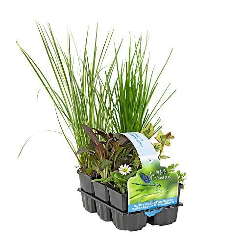 6x Insektenfreundliche Teichpflanzen...