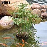 quanju cheer 30 Stück Wasser Bambussamen Cyperus Alternifolius Samen Semi-aquatische Wasserpflanze Teich Garten Dekor Cyperus Alternifolius Samen