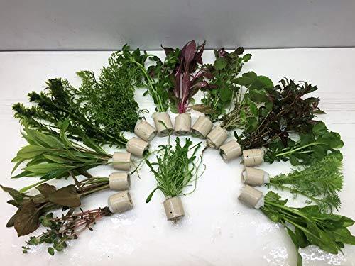 5 Bund 30 Stängel Aquarienpflanzen...