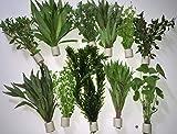 Aquarienpflanzen Wasserpflanzen...
