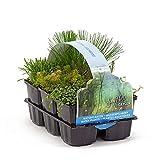 6x Teichpflanzen | Mischung von Wasserpflanzen