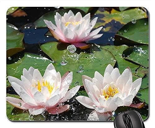 Mauspad Wasser Seerose Wasserpflanze...