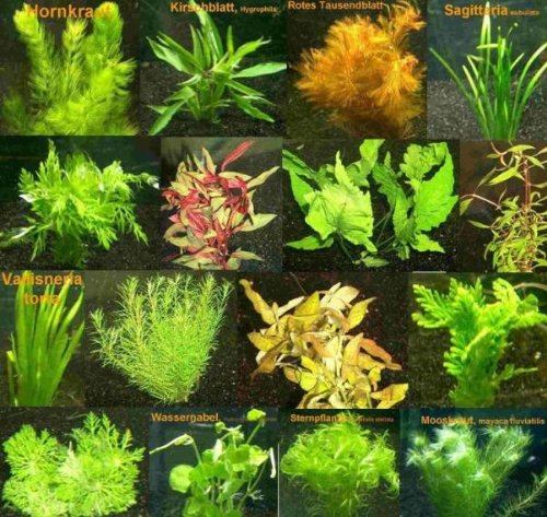 10 Bund - ca. 60 Wasserpflanzen+ 5...