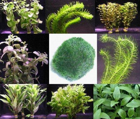 WFW wasserflora Anti-Algen-Set,...