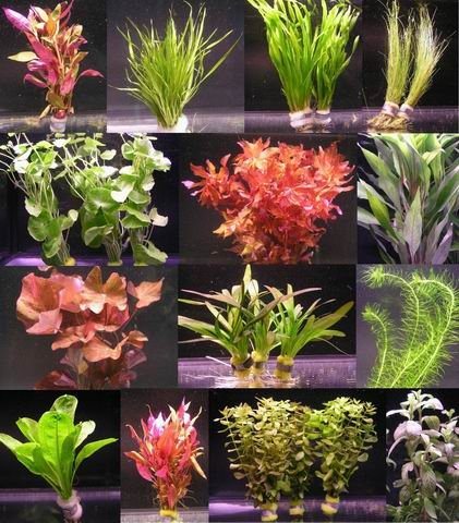 10 Bunde mit über 80 Aquarium-Pflanzen...