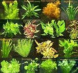 150 Wasserpflanzen XXL Set, Dünger, Aufbereiter, Aquariumpflanzen für alle Bereiche, Aquarienpflanzen in rot und grün, 22 Bund