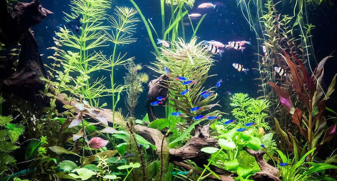 Aquarium Wasserpflanzen kaufen