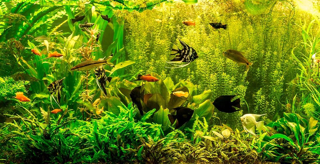 Die besten Wasserpflanzen für dein Aquarium