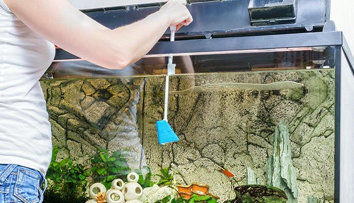 Was ist bei der wöchentlichen Pflege der Aquarienpflanzen zu beachten?
