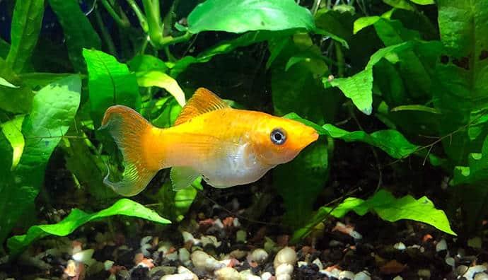 Aufsitzerpflanzen für das Aquarium - attraktiv und praktisch