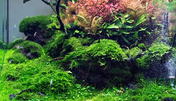 Wasserrasen für das Aquarium - ein gutes Mittel gegen Algen