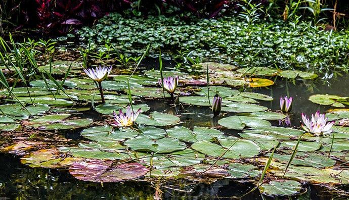 Pflegeleichte Wasserpflanzen für das Aquarium
