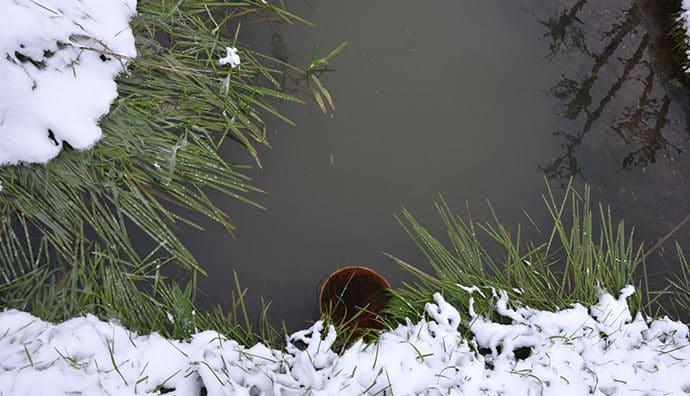 So kommen empfindliche Wasserpflanzen gut durch den Winter