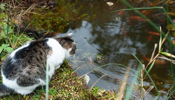 Wasserpflanzen, die für Katzen giftig sind