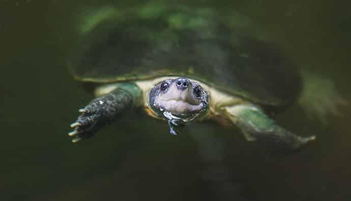 Welche Wasserpflanzen für Schildkröten sind optimal?